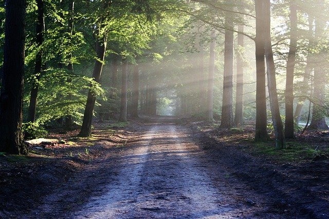 zbavit se stresu pomocí přírody