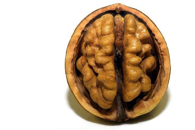 Výkon mozku
