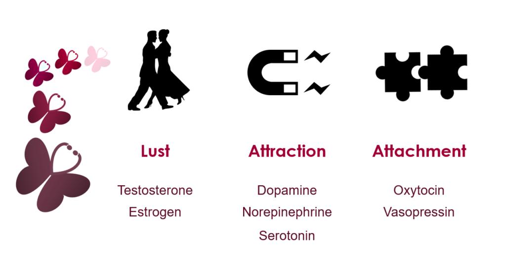 Romantická láska se skládá ze tří fází.